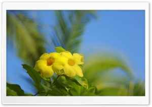 Hawaiian Flowers HD Wide Wallpaper for Widescreen