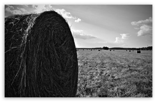 Hay Bail ❤ 4K UHD Wallpaper for Wide 16:10 5:3 Widescreen WHXGA WQXGA WUXGA WXGA WGA ; 4K UHD 16:9 Ultra High Definition 2160p 1440p 1080p 900p 720p ; Standard 4:3 5:4 3:2 Fullscreen UXGA XGA SVGA QSXGA SXGA DVGA HVGA HQVGA ( Apple PowerBook G4 iPhone 4 3G 3GS iPod Touch ) ; Tablet 1:1 ; iPad 1/2/Mini ; Mobile 4:3 5:3 3:2 16:9 5:4 - UXGA XGA SVGA WGA DVGA HVGA HQVGA ( Apple PowerBook G4 iPhone 4 3G 3GS iPod Touch ) 2160p 1440p 1080p 900p 720p QSXGA SXGA ;