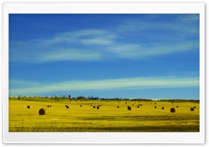 Hay Bales in a Field HD Wide Wallpaper for Widescreen