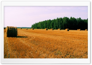 Haystack On Field HD Wide Wallpaper for Widescreen