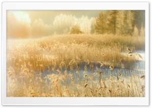 Hazy Shade Of Winter HD Wide Wallpaper for Widescreen