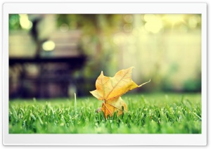 HD Leaf HD Wide Wallpaper for Widescreen