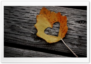 Heart Leaf Autumn Ultra HD Wallpaper for 4K UHD Widescreen desktop, tablet & smartphone