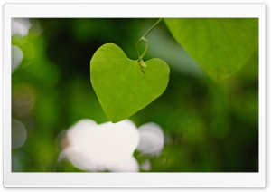 Heart Shaped Leaf HD Wide Wallpaper for Widescreen
