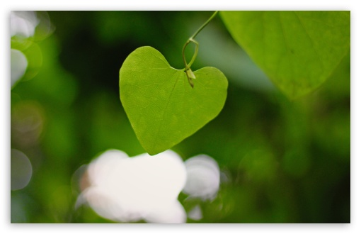 Heart Shaped Leaf HD wallpaper for Wide 16:10 5:3 Widescreen WHXGA WQXGA WUXGA WXGA WGA ; HD 16:9 High Definition WQHD QWXGA 1080p 900p 720p QHD nHD ; UHD 16:9 WQHD QWXGA 1080p 900p 720p QHD nHD ; Standard 4:3 5:4 3:2 Fullscreen UXGA XGA SVGA QSXGA SXGA DVGA HVGA HQVGA devices ( Apple PowerBook G4 iPhone 4 3G 3GS iPod Touch ) ; Tablet 1:1 ; iPad 1/2/Mini ; Mobile 4:3 5:3 3:2 16:9 5:4 - UXGA XGA SVGA WGA DVGA HVGA HQVGA devices ( Apple PowerBook G4 iPhone 4 3G 3GS iPod Touch ) WQHD QWXGA 1080p 900p 720p QHD nHD QSXGA SXGA ; Dual 5:4 QSXGA SXGA ;
