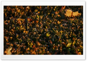 Hedge HD Wide Wallpaper for Widescreen