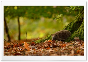 Hedgehog Under Tree HD Wide Wallpaper for 4K UHD Widescreen desktop & smartphone