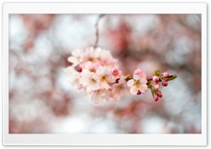 Hello Spring HD Wide Wallpaper for Widescreen