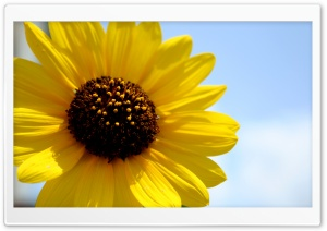 Hello, Sunshine HD Wide Wallpaper for Widescreen