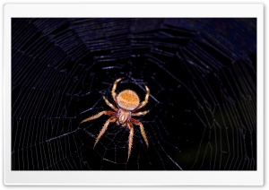 Hentzs Orbweaver HD Wide Wallpaper for Widescreen