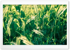 Herbage HD Wide Wallpaper for Widescreen