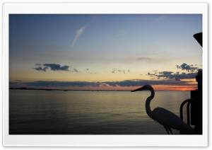 Heron. HD Wide Wallpaper for Widescreen