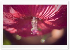 Hibiscus Bokeh HD Wide Wallpaper for Widescreen