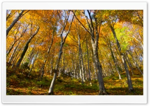 Hill Forest, Autumn HD Wide Wallpaper for 4K UHD Widescreen desktop & smartphone