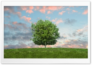 Hill Tree HD Wide Wallpaper for Widescreen
