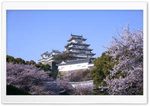 Himeji Castle And Cherry Blossoms HD Wide Wallpaper for 4K UHD Widescreen desktop & smartphone