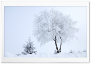 Hoarfrost HD Wide Wallpaper for Widescreen