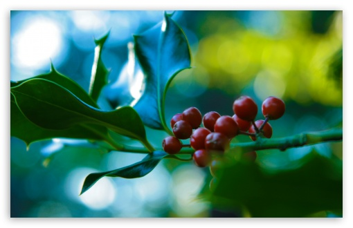 Holly And Berries HD wallpaper for Wide 16:10 5:3 Widescreen WHXGA WQXGA WUXGA WXGA WGA ; HD 16:9 High Definition WQHD QWXGA 1080p 900p 720p QHD nHD ; UHD 16:9 WQHD QWXGA 1080p 900p 720p QHD nHD ; Standard 4:3 5:4 3:2 Fullscreen UXGA XGA SVGA QSXGA SXGA DVGA HVGA HQVGA devices ( Apple PowerBook G4 iPhone 4 3G 3GS iPod Touch ) ; Tablet 1:1 ; iPad 1/2/Mini ; Mobile 4:3 5:3 3:2 16:9 5:4 - UXGA XGA SVGA WGA DVGA HVGA HQVGA devices ( Apple PowerBook G4 iPhone 4 3G 3GS iPod Touch ) WQHD QWXGA 1080p 900p 720p QHD nHD QSXGA SXGA ;
