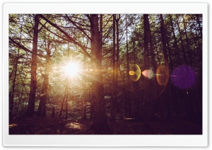 Holy Flare, Trees, Woods Ultra HD Wallpaper for 4K UHD Widescreen desktop, tablet & smartphone