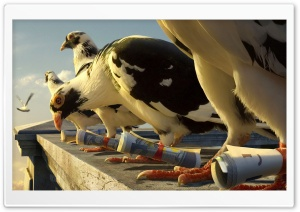 Homing Pigeons HD Wide Wallpaper for Widescreen