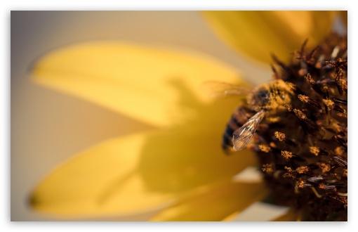 Honey Bee Pollinating Flowers ❤ 4K UHD Wallpaper for Wide 16:10 5:3 Widescreen WHXGA WQXGA WUXGA WXGA WGA ; 4K UHD 16:9 Ultra High Definition 2160p 1440p 1080p 900p 720p ; UHD 16:9 2160p 1440p 1080p 900p 720p ; Standard 4:3 5:4 3:2 Fullscreen UXGA XGA SVGA QSXGA SXGA DVGA HVGA HQVGA ( Apple PowerBook G4 iPhone 4 3G 3GS iPod Touch ) ; Smartphone 5:3 WGA ; Tablet 1:1 ; iPad 1/2/Mini ; Mobile 4:3 5:3 3:2 16:9 5:4 - UXGA XGA SVGA WGA DVGA HVGA HQVGA ( Apple PowerBook G4 iPhone 4 3G 3GS iPod Touch ) 2160p 1440p 1080p 900p 720p QSXGA SXGA ;