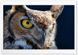 Hoot HD Wide Wallpaper for Widescreen