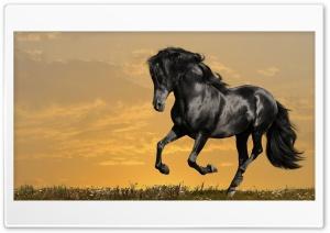 Horse16 Ultra HD Wallpaper for 4K UHD Widescreen desktop, tablet & smartphone
