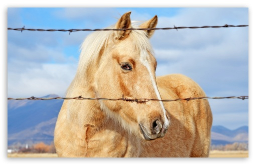Horse ❤ 4K UHD Wallpaper for Wide 16:10 5:3 Widescreen WHXGA WQXGA WUXGA WXGA WGA ; 4K UHD 16:9 Ultra High Definition 2160p 1440p 1080p 900p 720p ; Standard 4:3 5:4 3:2 Fullscreen UXGA XGA SVGA QSXGA SXGA DVGA HVGA HQVGA ( Apple PowerBook G4 iPhone 4 3G 3GS iPod Touch ) ; Tablet 1:1 ; iPad 1/2/Mini ; Mobile 4:3 5:3 3:2 16:9 5:4 - UXGA XGA SVGA WGA DVGA HVGA HQVGA ( Apple PowerBook G4 iPhone 4 3G 3GS iPod Touch ) 2160p 1440p 1080p 900p 720p QSXGA SXGA ;