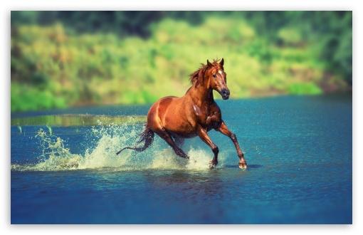 Horse ❤ 4K UHD Wallpaper for Wide 16:10 5:3 Widescreen WHXGA WQXGA WUXGA WXGA WGA ; UltraWide 21:9 24:10 ; 4K UHD 16:9 Ultra High Definition 2160p 1440p 1080p 900p 720p ; UHD 16:9 2160p 1440p 1080p 900p 720p ; Standard 4:3 5:4 3:2 Fullscreen UXGA XGA SVGA QSXGA SXGA DVGA HVGA HQVGA ( Apple PowerBook G4 iPhone 4 3G 3GS iPod Touch ) ; Smartphone 16:9 3:2 5:3 2160p 1440p 1080p 900p 720p DVGA HVGA HQVGA ( Apple PowerBook G4 iPhone 4 3G 3GS iPod Touch ) WGA ; Tablet 1:1 ; iPad 1/2/Mini ; Mobile 4:3 5:3 3:2 16:9 5:4 - UXGA XGA SVGA WGA DVGA HVGA HQVGA ( Apple PowerBook G4 iPhone 4 3G 3GS iPod Touch ) 2160p 1440p 1080p 900p 720p QSXGA SXGA ; Dual 16:10 5:3 16:9 4:3 5:4 3:2 WHXGA WQXGA WUXGA WXGA WGA 2160p 1440p 1080p 900p 720p UXGA XGA SVGA QSXGA SXGA DVGA HVGA HQVGA ( Apple PowerBook G4 iPhone 4 3G 3GS iPod Touch ) ;