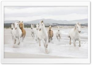 Horse 10 Ultra HD Wallpaper for 4K UHD Widescreen desktop, tablet & smartphone