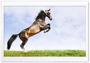 Horse 12 Ultra HD Wallpaper for 4K UHD Widescreen desktop, tablet & smartphone