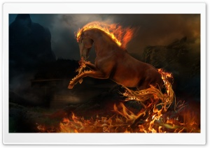 Horse HD Wide Wallpaper for Widescreen