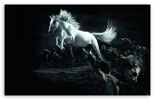 Horse and Wolves HD wallpaper for Wide 16:10 5:3 Widescreen WHXGA WQXGA WUXGA WXGA WGA ; HD 16:9 High Definition WQHD QWXGA 1080p 900p 720p QHD nHD ; Standard 4:3 5:4 3:2 Fullscreen UXGA XGA SVGA QSXGA SXGA DVGA HVGA HQVGA devices ( Apple PowerBook G4 iPhone 4 3G 3GS iPod Touch ) ; iPad 1/2/Mini ; Mobile 4:3 5:3 3:2 16:9 5:4 - UXGA XGA SVGA WGA DVGA HVGA HQVGA devices ( Apple PowerBook G4 iPhone 4 3G 3GS iPod Touch ) WQHD QWXGA 1080p 900p 720p QHD nHD QSXGA SXGA ;
