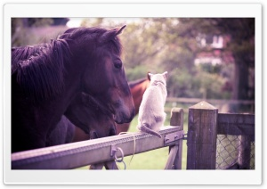 Horse Cat Friendship HD Wide Wallpaper for 4K UHD Widescreen desktop & smartphone