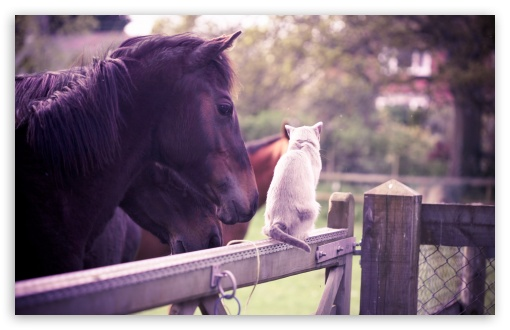 Horse Cat Friendship HD wallpaper for Wide 16:10 5:3 Widescreen WHXGA WQXGA WUXGA WXGA WGA ; HD 16:9 High Definition WQHD QWXGA 1080p 900p 720p QHD nHD ; UHD 16:9 WQHD QWXGA 1080p 900p 720p QHD nHD ; Standard 4:3 5:4 3:2 Fullscreen UXGA XGA SVGA QSXGA SXGA DVGA HVGA HQVGA devices ( Apple PowerBook G4 iPhone 4 3G 3GS iPod Touch ) ; Tablet 1:1 ; iPad 1/2/Mini ; Mobile 4:3 5:3 3:2 16:9 5:4 - UXGA XGA SVGA WGA DVGA HVGA HQVGA devices ( Apple PowerBook G4 iPhone 4 3G 3GS iPod Touch ) WQHD QWXGA 1080p 900p 720p QHD nHD QSXGA SXGA ;
