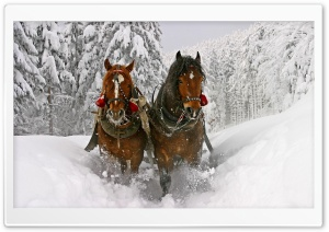 Horse Drawn Carriage In Snow HD Wide Wallpaper for Widescreen