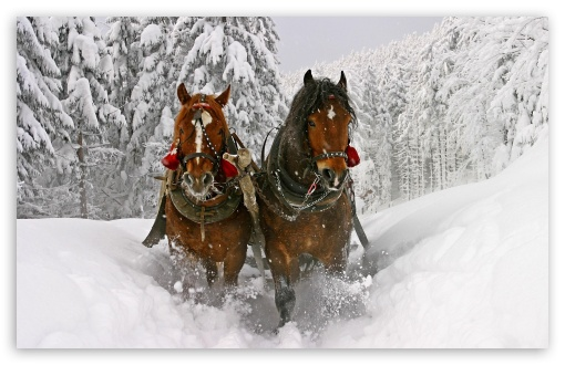 Horse Drawn Carriage In Snow HD wallpaper for Wide 16:10 5:3 Widescreen WHXGA WQXGA WUXGA WXGA WGA ; HD 16:9 High Definition WQHD QWXGA 1080p 900p 720p QHD nHD ; Standard 4:3 5:4 3:2 Fullscreen UXGA XGA SVGA QSXGA SXGA DVGA HVGA HQVGA devices ( Apple PowerBook G4 iPhone 4 3G 3GS iPod Touch ) ; Tablet 1:1 ; iPad 1/2/Mini ; Mobile 4:3 5:3 3:2 16:9 5:4 - UXGA XGA SVGA WGA DVGA HVGA HQVGA devices ( Apple PowerBook G4 iPhone 4 3G 3GS iPod Touch ) WQHD QWXGA 1080p 900p 720p QHD nHD QSXGA SXGA ;