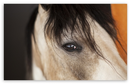 Horse Eye ❤ 4K UHD Wallpaper for Wide 16:10 5:3 Widescreen WHXGA WQXGA WUXGA WXGA WGA ; UltraWide 21:9 24:10 ; 4K UHD 16:9 Ultra High Definition 2160p 1440p 1080p 900p 720p ; UHD 16:9 2160p 1440p 1080p 900p 720p ; Standard 4:3 5:4 3:2 Fullscreen UXGA XGA SVGA QSXGA SXGA DVGA HVGA HQVGA ( Apple PowerBook G4 iPhone 4 3G 3GS iPod Touch ) ; Smartphone 16:9 3:2 5:3 2160p 1440p 1080p 900p 720p DVGA HVGA HQVGA ( Apple PowerBook G4 iPhone 4 3G 3GS iPod Touch ) WGA ; Tablet 1:1 ; iPad 1/2/Mini ; Mobile 4:3 5:3 3:2 16:9 5:4 - UXGA XGA SVGA WGA DVGA HVGA HQVGA ( Apple PowerBook G4 iPhone 4 3G 3GS iPod Touch ) 2160p 1440p 1080p 900p 720p QSXGA SXGA ;