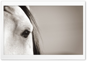 Horse Eye HD Wide Wallpaper for 4K UHD Widescreen desktop & smartphone