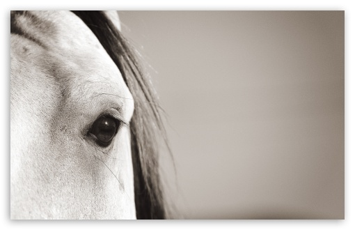Horse Eye HD wallpaper for Wide 16:10 5:3 Widescreen WHXGA WQXGA WUXGA WXGA WGA ; HD 16:9 High Definition WQHD QWXGA 1080p 900p 720p QHD nHD ; UHD 16:9 WQHD QWXGA 1080p 900p 720p QHD nHD ; Standard 4:3 5:4 3:2 Fullscreen UXGA XGA SVGA QSXGA SXGA DVGA HVGA HQVGA devices ( Apple PowerBook G4 iPhone 4 3G 3GS iPod Touch ) ; Tablet 1:1 ; iPad 1/2/Mini ; Mobile 4:3 5:3 3:2 16:9 5:4 - UXGA XGA SVGA WGA DVGA HVGA HQVGA devices ( Apple PowerBook G4 iPhone 4 3G 3GS iPod Touch ) WQHD QWXGA 1080p 900p 720p QHD nHD QSXGA SXGA ;
