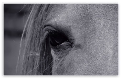 Horse Eye ❤ 4K UHD Wallpaper for Wide 16:10 5:3 Widescreen WHXGA WQXGA WUXGA WXGA WGA ; 4K UHD 16:9 Ultra High Definition 2160p 1440p 1080p 900p 720p ; UHD 16:9 2160p 1440p 1080p 900p 720p ; Standard 4:3 5:4 3:2 Fullscreen UXGA XGA SVGA QSXGA SXGA DVGA HVGA HQVGA ( Apple PowerBook G4 iPhone 4 3G 3GS iPod Touch ) ; Tablet 1:1 ; iPad 1/2/Mini ; Mobile 4:3 5:3 3:2 16:9 5:4 - UXGA XGA SVGA WGA DVGA HVGA HQVGA ( Apple PowerBook G4 iPhone 4 3G 3GS iPod Touch ) 2160p 1440p 1080p 900p 720p QSXGA SXGA ;