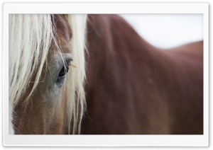 Horse Eyes HD Wide Wallpaper for Widescreen