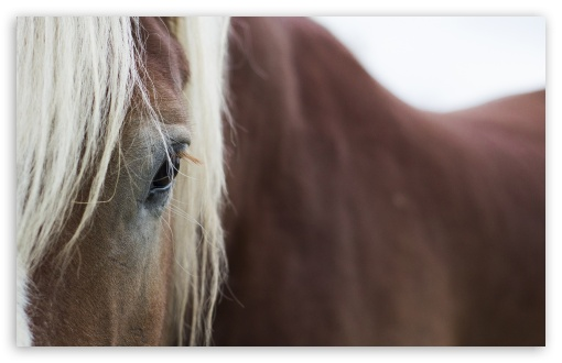 Horse Eyes ❤ 4K UHD Wallpaper for Wide 16:10 5:3 Widescreen WHXGA WQXGA WUXGA WXGA WGA ; 4K UHD 16:9 Ultra High Definition 2160p 1440p 1080p 900p 720p ; UHD 16:9 2160p 1440p 1080p 900p 720p ; Standard 4:3 5:4 3:2 Fullscreen UXGA XGA SVGA QSXGA SXGA DVGA HVGA HQVGA ( Apple PowerBook G4 iPhone 4 3G 3GS iPod Touch ) ; Smartphone 5:3 WGA ; Tablet 1:1 ; iPad 1/2/Mini ; Mobile 4:3 5:3 3:2 16:9 5:4 - UXGA XGA SVGA WGA DVGA HVGA HQVGA ( Apple PowerBook G4 iPhone 4 3G 3GS iPod Touch ) 2160p 1440p 1080p 900p 720p QSXGA SXGA ;