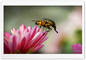 Horse Fly HD Wide Wallpaper for Widescreen