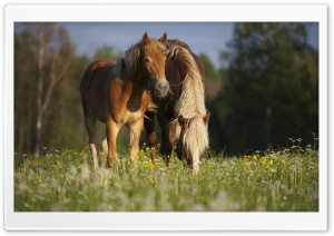 Horse In Meadow HD Wide Wallpaper for Widescreen