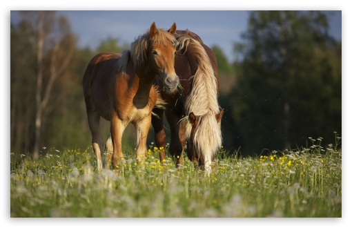 Horse In Meadow HD wallpaper for Wide 16:10 5:3 Widescreen WHXGA WQXGA WUXGA WXGA WGA ; HD 16:9 High Definition WQHD QWXGA 1080p 900p 720p QHD nHD ; Standard 4:3 5:4 3:2 Fullscreen UXGA XGA SVGA QSXGA SXGA DVGA HVGA HQVGA devices ( Apple PowerBook G4 iPhone 4 3G 3GS iPod Touch ) ; Tablet 1:1 ; iPad 1/2/Mini ; Mobile 4:3 5:3 3:2 16:9 5:4 - UXGA XGA SVGA WGA DVGA HVGA HQVGA devices ( Apple PowerBook G4 iPhone 4 3G 3GS iPod Touch ) WQHD QWXGA 1080p 900p 720p QHD nHD QSXGA SXGA ;