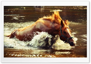 Horse In Water HD Wide Wallpaper for Widescreen