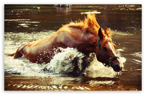 Horse In Water HD wallpaper for Wide 16:10 5:3 Widescreen WHXGA WQXGA WUXGA WXGA WGA ; HD 16:9 High Definition WQHD QWXGA 1080p 900p 720p QHD nHD ; UHD 16:9 WQHD QWXGA 1080p 900p 720p QHD nHD ; Standard 4:3 5:4 3:2 Fullscreen UXGA XGA SVGA QSXGA SXGA DVGA HVGA HQVGA devices ( Apple PowerBook G4 iPhone 4 3G 3GS iPod Touch ) ; iPad 1/2/Mini ; Mobile 4:3 5:3 3:2 16:9 5:4 - UXGA XGA SVGA WGA DVGA HVGA HQVGA devices ( Apple PowerBook G4 iPhone 4 3G 3GS iPod Touch ) WQHD QWXGA 1080p 900p 720p QHD nHD QSXGA SXGA ;