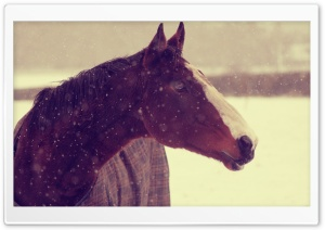 Horse In Winter HD Wide Wallpaper for 4K UHD Widescreen desktop & smartphone