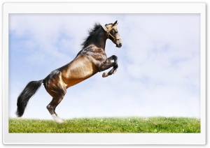 Horse On Hind Legs HD Wide Wallpaper for 4K UHD Widescreen desktop & smartphone